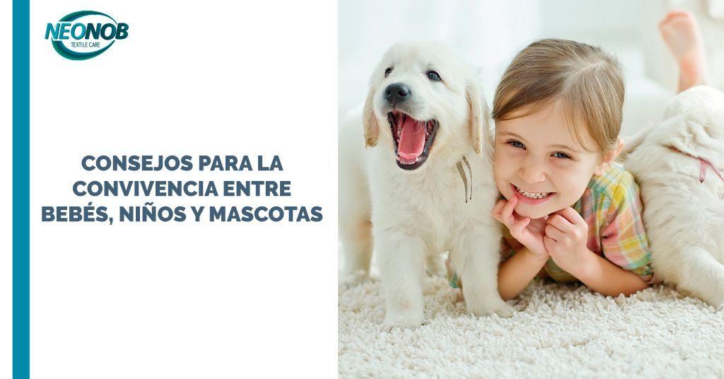 Consejos de convivencia entre bebés y mascotas