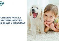 Consejos de convivencia entre bebés y mascotas y niños