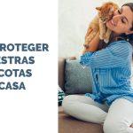Consejos para proteger a nuestras mascotas en casa