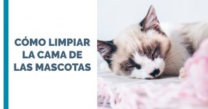Cómo limpiar la cama de nuestras mascotas